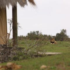 Отель Gorah Elephant Camp фото 7