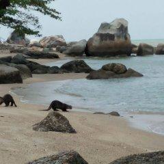 Отель Delite Guest House No 13 @ Batu Ferringhi пляж фото 2
