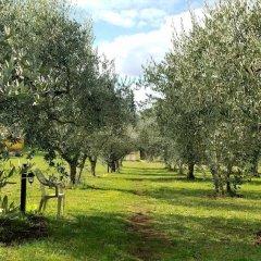 Отель Olive Tree Hill Италия, Дзагароло - отзывы, цены и фото номеров - забронировать отель Olive Tree Hill онлайн приотельная территория