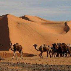 Отель La Gazelle Bleue Марокко, Мерзуга - отзывы, цены и фото номеров - забронировать отель La Gazelle Bleue онлайн пляж фото 2