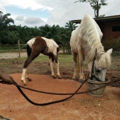 Отель Villa Ban Tanay с домашними животными