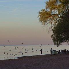 Гостиница Репинская пляж фото 2