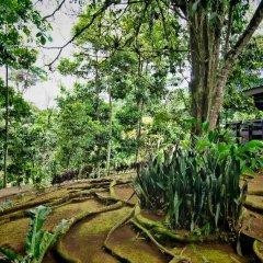 Отель Chachagua Rainforest Ecolodge фото 20