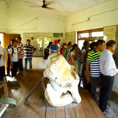 Отель Safari Adventure Lodge Непал, Саураха - отзывы, цены и фото номеров - забронировать отель Safari Adventure Lodge онлайн развлечения