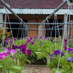 Гостевой Дом Petunia Garden Homestay фото 14