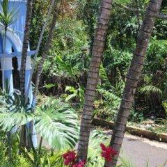 Отель Beachcomber Club Resort Ямайка, Саванна-Ла-Мар - отзывы, цены и фото номеров - забронировать отель Beachcomber Club Resort онлайн фото 3