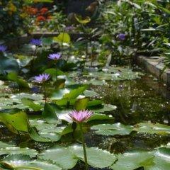 Отель Orchid Garden Homestay фото 2