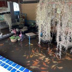 Отель Eddy's Place Самуи бассейн фото 2