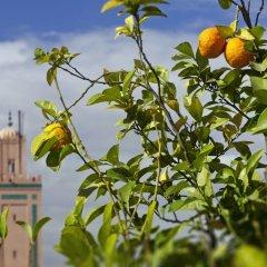 Отель Riad Farnatchi Марокко, Марракеш - отзывы, цены и фото номеров - забронировать отель Riad Farnatchi онлайн фото 4