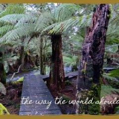 Отель Lemonthyme Wilderness Retreat фото 5