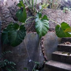 Отель Blanca Cottage Унаватуна фото 8