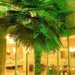 Отель Magic Palm Hotel Болгария, Равда - отзывы, цены и фото номеров - забронировать отель Magic Palm Hotel онлайн