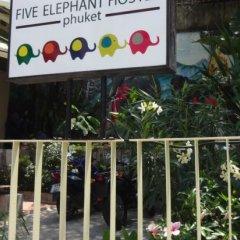 Five Elephant Hostel балкон