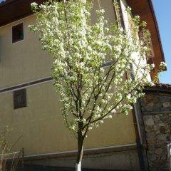 Отель Rooms in Velina House фото 7