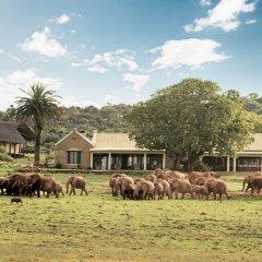 Отель Gorah Elephant Camp фото 8