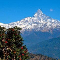 Отель Himalayan Deurali Resort Непал, Лехнат - отзывы, цены и фото номеров - забронировать отель Himalayan Deurali Resort онлайн фото 10