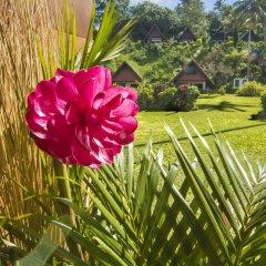 Отель Crusoe's Retreat Фиджи, Вити-Леву - отзывы, цены и фото номеров - забронировать отель Crusoe's Retreat онлайн фото 5