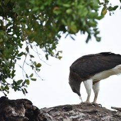 Отель Mahoora Tented Safari Camp - Kumana Шри-Ланка, Яла - отзывы, цены и фото номеров - забронировать отель Mahoora Tented Safari Camp - Kumana онлайн помещение для мероприятий фото 2