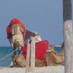 Отель Diar Yassine Тунис, Мидун - отзывы, цены и фото номеров - забронировать отель Diar Yassine онлайн приотельная территория