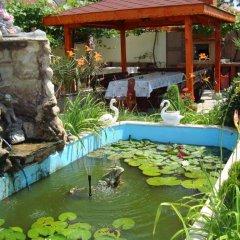 Отель Guest House Alberto Болгария, Равда - отзывы, цены и фото номеров - забронировать отель Guest House Alberto онлайн бассейн