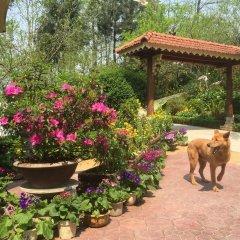Отель Sapa Garden Bed and Breakfast Вьетнам, Шапа - отзывы, цены и фото номеров - забронировать отель Sapa Garden Bed and Breakfast онлайн с домашними животными
