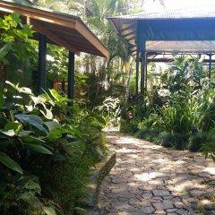 Отель Colo-I-Suva Rainforest Eco Resort Вити-Леву фото 13