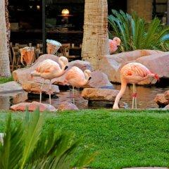 Отель Flamingo Las Vegas - Hotel & Casino США, Лас-Вегас - 11 отзывов об отеле, цены и фото номеров - забронировать отель Flamingo Las Vegas - Hotel & Casino онлайн питание фото 2