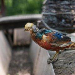 Ареал Конгресс отель с домашними животными