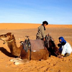 Отель La Gazelle Bleue Марокко, Мерзуга - отзывы, цены и фото номеров - забронировать отель La Gazelle Bleue онлайн с домашними животными