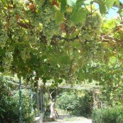 Отель Guest House Spiro Near Botanical Garden Балчик приотельная территория
