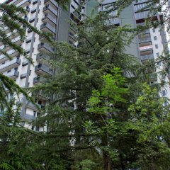 Апартаменты Luxury Apartments Тбилиси
