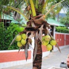 Курортный отель Lamai Coconut Beach спортивное сооружение