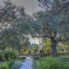 Отель Olive Farm Of Datca Guesthouse - Adults Only Датча фото 5