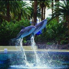 Отель The Mirage США, Лас-Вегас - 10 отзывов об отеле, цены и фото номеров - забронировать отель The Mirage онлайн бассейн