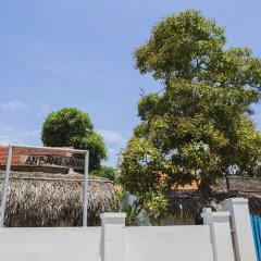 Отель Cashew Tree Bungalow фото 7