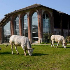 Отель Agriturismo Cascina Caremma Бесате с домашними животными
