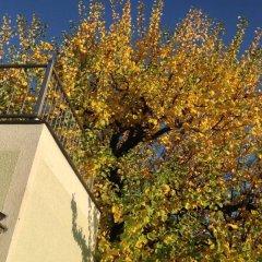 Отель Ajo Luxury Apartements Австрия, Вена - отзывы, цены и фото номеров - забронировать отель Ajo Luxury Apartements онлайн
