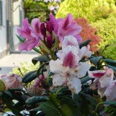 Отель Residenza Serena Италия, Мирано - отзывы, цены и фото номеров - забронировать отель Residenza Serena онлайн фото 4