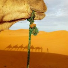 Отель Sandfish Марокко, Мерзуга - отзывы, цены и фото номеров - забронировать отель Sandfish онлайн приотельная территория фото 2