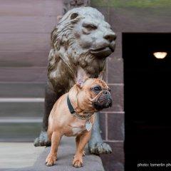 Отель The Mansion on O Street США, Вашингтон - отзывы, цены и фото номеров - забронировать отель The Mansion on O Street онлайн с домашними животными