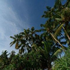 Отель swelanka residence Шри-Ланка, Бентота - отзывы, цены и фото номеров - забронировать отель swelanka residence онлайн фото 2
