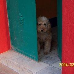 Отель Casa de las Flores Мексика, Тлакуепакуе - отзывы, цены и фото номеров - забронировать отель Casa de las Flores онлайн с домашними животными