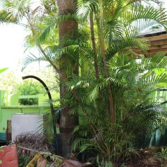 Отель Negril Beach Club фото 5