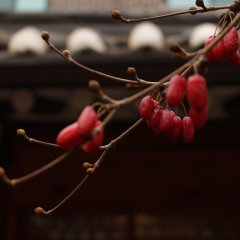 Отель The Place Seoul Hanok Guesthouse развлечения