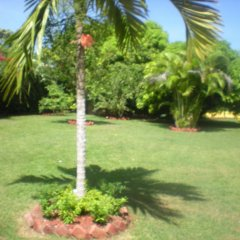 Отель Villa Sonate Ямайка, Ранавей-Бей - отзывы, цены и фото номеров - забронировать отель Villa Sonate онлайн фото 4