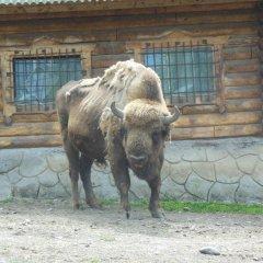 Titmouse House Hostel с домашними животными