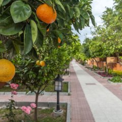 Hotel Ozlem Garden - All Inclusive фото 23