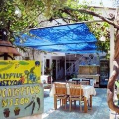 Eucalyptus Pension Турция, Патара - отзывы, цены и фото номеров - забронировать отель Eucalyptus Pension онлайн питание фото 2