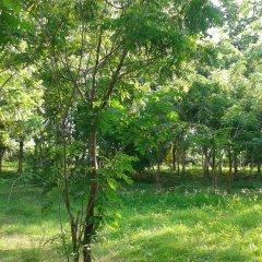 Отель Lavish Eco Jungle фото 5