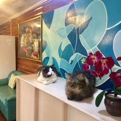 Отель Ace Traveller's Inn Филиппины, Пуэрто-Принцеса - отзывы, цены и фото номеров - забронировать отель Ace Traveller's Inn онлайн с домашними животными